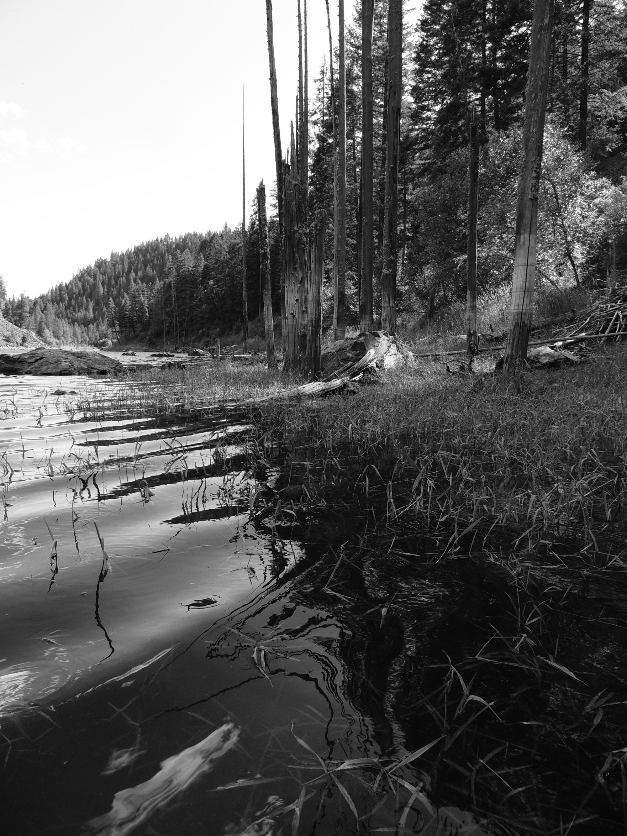 Bayley Lake Landscape
